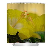 Chinese Rose Duo Shower Curtain