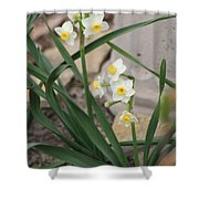 Chinese Sacred Lily Shower Curtain