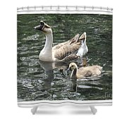 Chinese Swan Goose And Gosling Shower Curtain