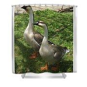 Chinese Swan Goose Pair 2 Shower Curtain