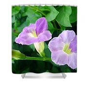 Chinese Violet  1 Shower Curtain