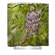Chinese Wisteria Shower Curtain