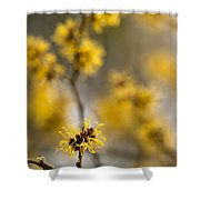 Chinese Witch Hazel Shower Curtain