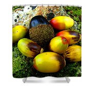 Chinquapin Harvest Shower Curtain