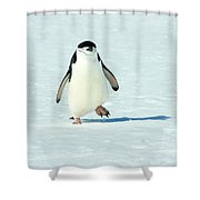 Chinstrap Penguin Running Shower Curtain