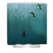 Chinstrap Penguins Leaping Shower Curtain