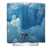 Chinstrap Penguins On Blue Iceberg Shower Curtain