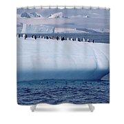 Chinstrap Penguins On Iceberg Shower Curtain