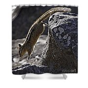 Chipmunk   #2155 Shower Curtain