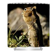 Chipmunk   #9594 Shower Curtain