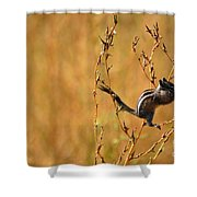 Chipmunk Cheeks Shower Curtain