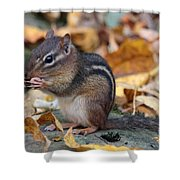 Chipmunk Hungry Shower Curtain
