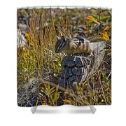 Chipmunk In Yellowstone Shower Curtain