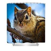 Chipmunk On A Branch Shower Curtain