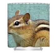 Chipmunk Portrait Shower Curtain