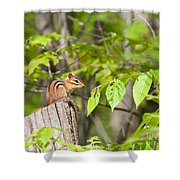 Chipmunk Shares Fence Post Shower Curtain