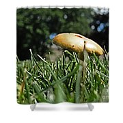 Chipmunks View Of A Mushroom Shower Curtain