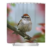 Chipping Sparrow In Blossoms Shower Curtain by Deborah Benoit