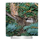 Chipping Sparrow On Nest Shower Curtain