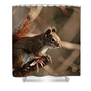 Chippy Perched Shower Curtain