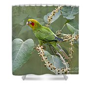 Chiriqui Conure 2 - Dp Shower Curtain