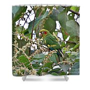 Chiriqui Conure Shower Curtain