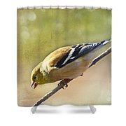Chirping Gold Finch Shower Curtain