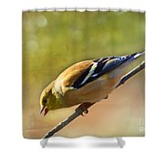 Chirping Gold Finch - Painted Effect Shower Curtain