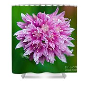 Chive Flower Shower Curtain