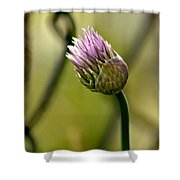 Chive In Bloom Shower Curtain