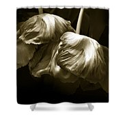 Chocolate Kisses Shower Curtain