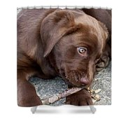 Chocolate Lab Pup Shower Curtain