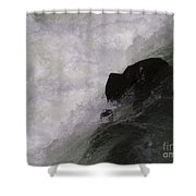 Chocolate Lab Rock Shower Curtain