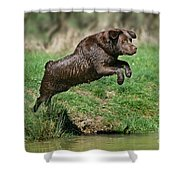 Chocolate Labrador Jumping Shower Curtain