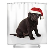 Chocolate Labrador Puppy, 6 Weeks Old Shower Curtain