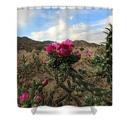 Cholla Cactus Blooming In The Sandia Foothills Shower Curtain
