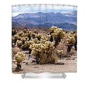 Cholla Cactus Garden Shower Curtain