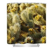 Cholla Cactus Garden Mirage Shower Curtain