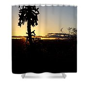 Cholla Cactus Sunset Shower Curtain