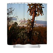 Cholla Cactus View Shower Curtain