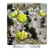 Cholla Flowers Shower Curtain