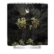 Cholla Light - Joshua Tree National Park Shower Curtain