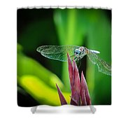 Chomped Wing Shower Curtain