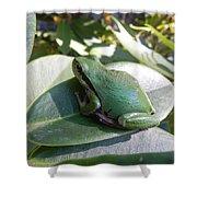 Chorus Frog On A Rhodo Shower Curtain