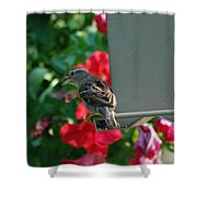 Chow Time At The Bird Feeder Shower Curtain