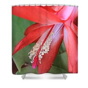 Christmas Cactus 3 Shower Curtain