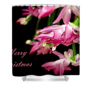 Christmas Cactus Greeting Card Shower Curtain by Carolyn Marshall