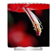Christmas Cactus Pistil And Stamens Shower Curtain by Rona Black