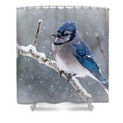 Christmas Card Bluejay Shower Curtain
