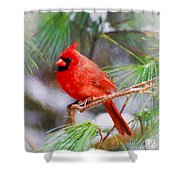 Christmas Cardinal - Male Shower Curtain